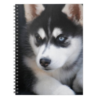 Beautiful One Blue Eye Siberian Husky 2 Notebooks