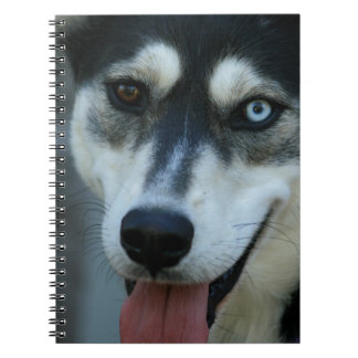 Beautiful One Blue Eye Siberian Husky Notebooks
