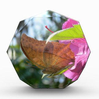 Beautiful Orange Butterfly on a Pink Flower Award