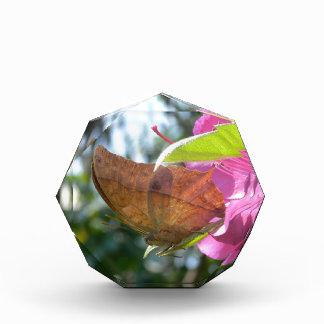 Beautiful Orange Butterfly on a Pink Flower Acrylic Award