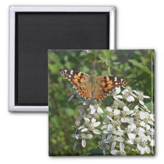 Beautiful Orange Butterfly & White Flowers Magnet