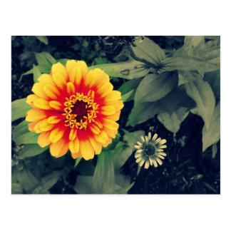 Beautiful Orange Dahlia Floral Custom Postcard