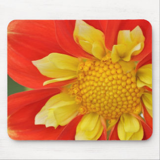 Beautiful orange dahlia print mouse pad
