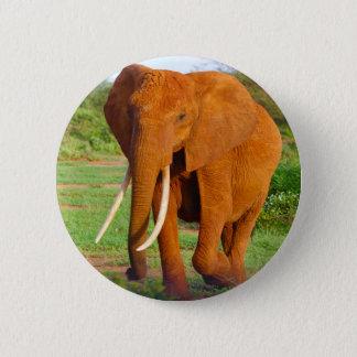 Beautiful Orange Elephant Pinback Button