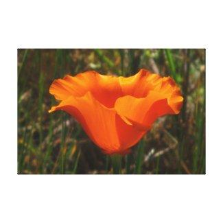 Beautiful Orange Flower Canvas Print