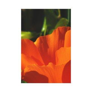 Beautiful Orange Flower Canvas Prints
