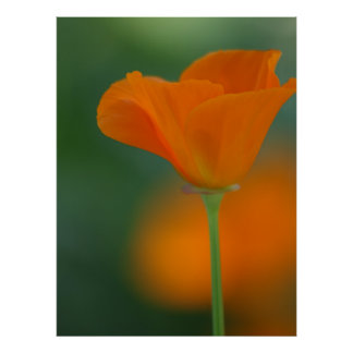 Beautiful Orange Flower Poster