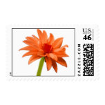 Beautiful Orange Flower Stamps