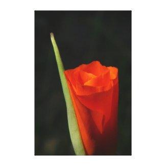 Beautiful Orange Flower Stretched Canvas Print