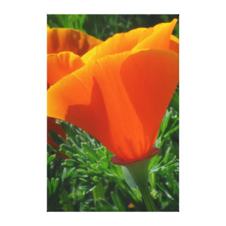 Beautiful Orange Flowers Canvas Print