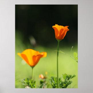 Beautiful Orange Flowers Poster