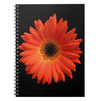 Beautiful Orange Gerbera Daisy Spiral Notebooks