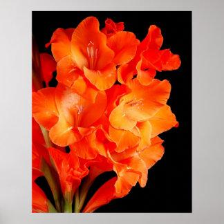 beautiful orange gladiolas poster