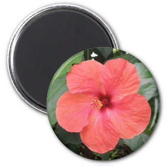 Beautiful Orange Hibiscus Flower Magnet