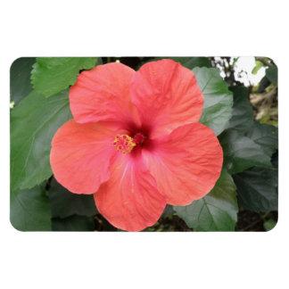 Beautiful Orange Hibiscus Flower Premium Magnet