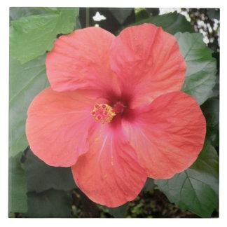 Beautiful Orange Hibiscus Flower Tile