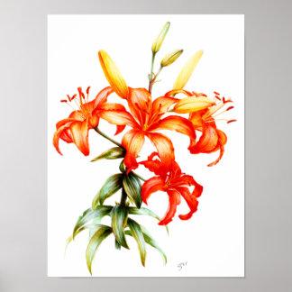 Beautiful orange lilies pencil and watercolor art poster