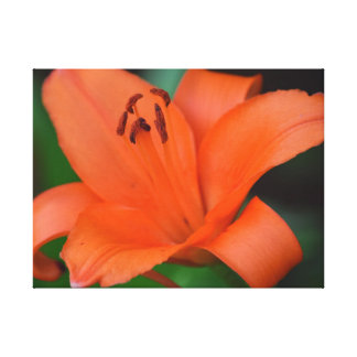 Beautiful Orange Lilly, Floral Photography Canvas Print