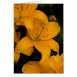 Beautiful Orange Lily Flowers note card