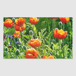 Beautiful orange poppy flower print rectangular sticker