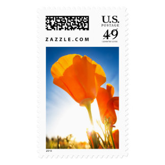 Beautiful Orange Poppy Flowers in a Field with Sun Postage Stamps
