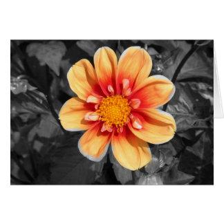 Beautiful orange red dahlia black white background card
