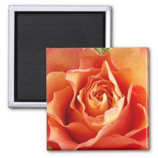 Beautiful Orange Rose Bloom Magnet