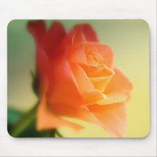 Beautiful Orange Rose Mouse Pad