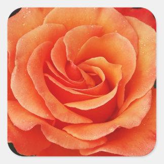 Beautiful orange rose petals print square sticker