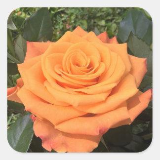 Beautiful orange rose photo sticker