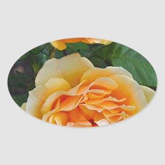 Beautiful orange roses oval sticker
