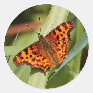 Beautiful Orange Satyr Comma Butterfly Classic Round Sticker