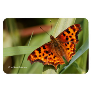 Beautiful Orange Satyr Comma Butterfly Magnet