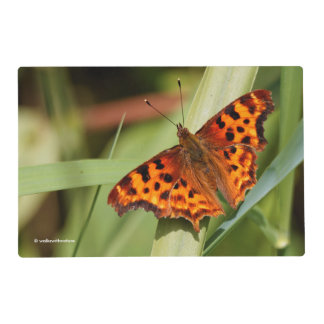 Beautiful Orange Satyr Comma Butterfly Placemat