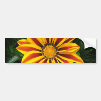 Beautiful Orange Sun Flower Photo Bumper Sticker