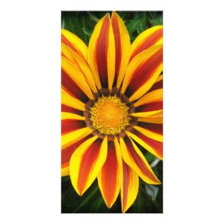 Beautiful Orange Sun Flower Photo Card