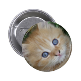 Beautiful Orange Tabby Kitten 2 Inch Round Button