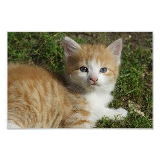 Beautiful Orange Tabby Kitten Photographic Print