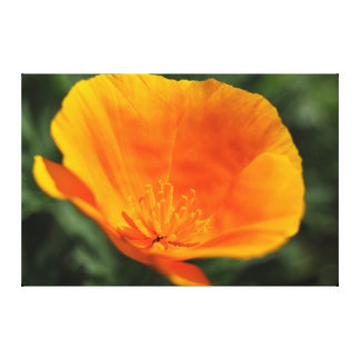 Beautiful Orange Yellow Flower Canvas Print