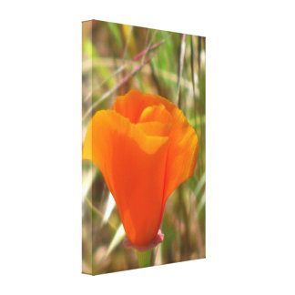 Beautiful Orange Yellow Flower Canvas Print
