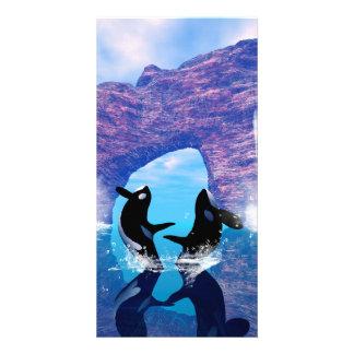 Beautiful orca photo card