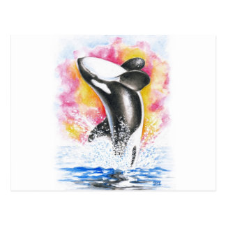 Beautiful Orca Whale Breaching Postcard