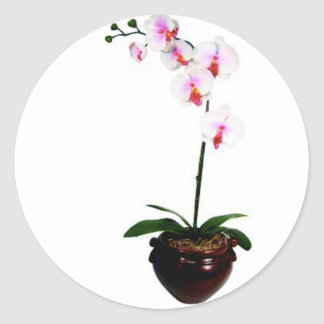 Beautiful Orchid Classic Round Sticker