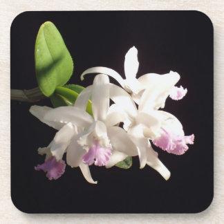Beautiful Orchid Flower Bloom Coaster Set