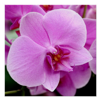 Beautiful Orchid Perfect Poster