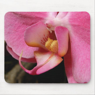Beautiful Orchid Photographs Mouse Pad