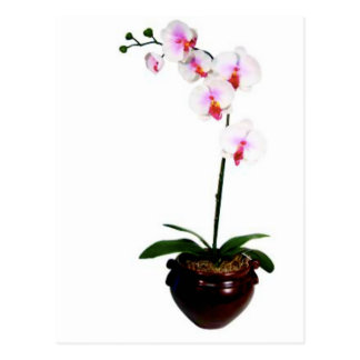 Beautiful Orchid Postcard