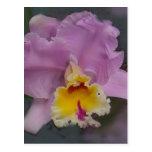 Beautiful Orchid Postcard