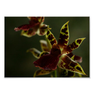 Beautiful Orchid Poster! Poster