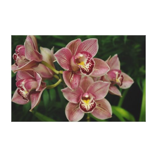 Beautiful Orchid Wrapped Canvas Canvas Print